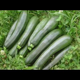 Carbassó verd ECO 1kg