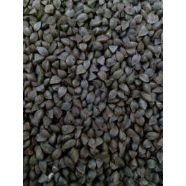 Farina integral de fajol - blat sarrai