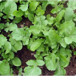 Ruca (Eruca Sativa) ECO de Verges 100 gr