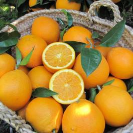 Taronja Navelina ECO 3 Kg Alberic (València)