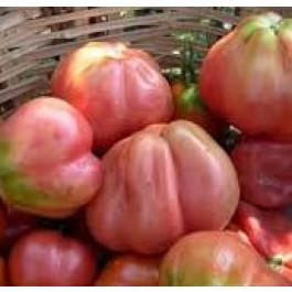 Tomata Montserrat plé ECO de Rupià 1kg