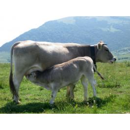 Culata cuixa (bistec) ECO de vedella